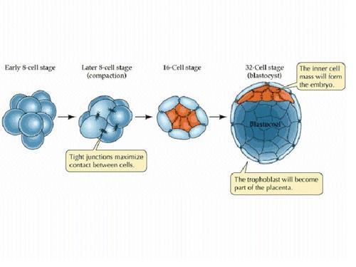 Sel-sel Imun di Uterus