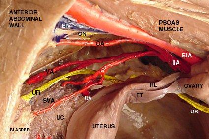 Arus Darah Utero-plasenta